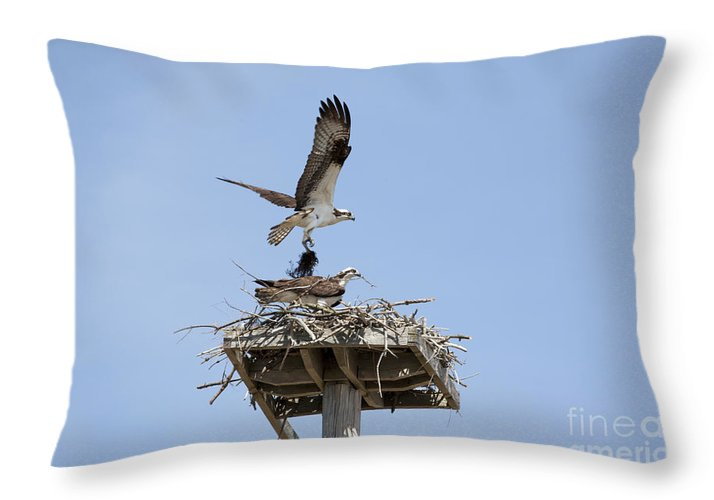 Osprey Throw Pillow featuring the photograph Nesting Osprey In New England by Erin Paul Donovan