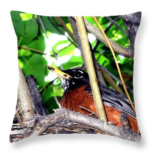 Robin Throw Pillow featuring the photograph Nesting Robin by Will Borden