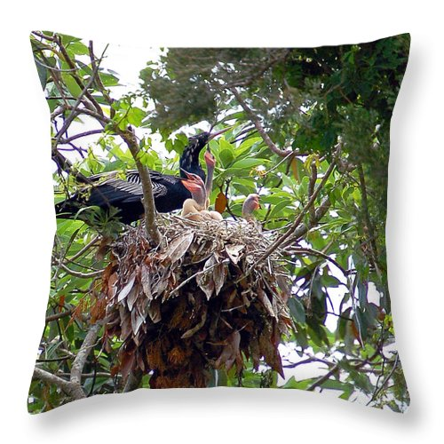 Anhinga Throw Pillow featuring the photograph Nestling Anhingas by Donna Proctor