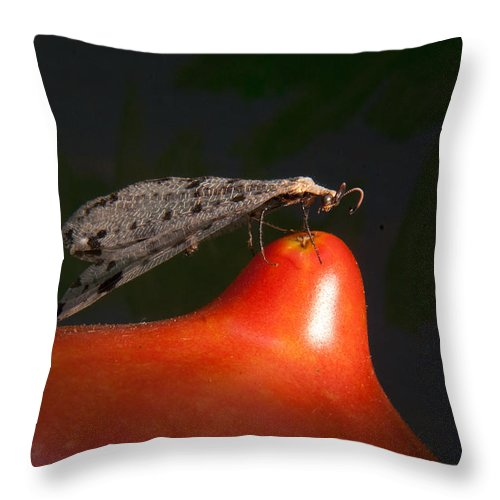 Neuropter Throw Pillow featuring the photograph Neuroptera Posing by Douglas Barnett