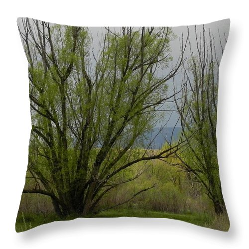 Trees Throw Pillow featuring the photograph New and Green by Adrienne Petterson
