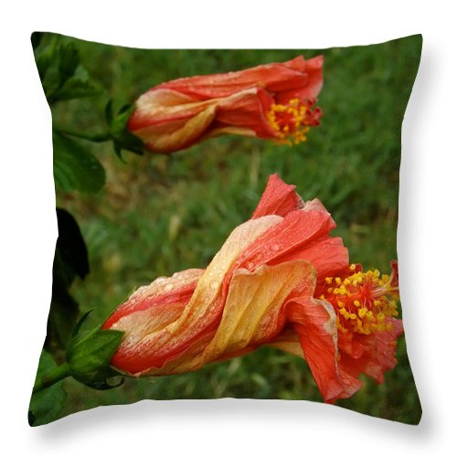 Nature Throw Pillow featuring the photograph New Beginnings by Annie's Images
