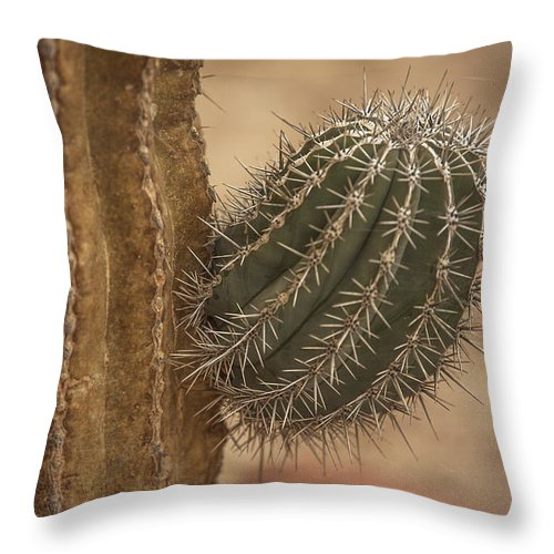 Saguaro Cactus Throw Pillow featuring the photograph New Beginnings by Leena Hannonen