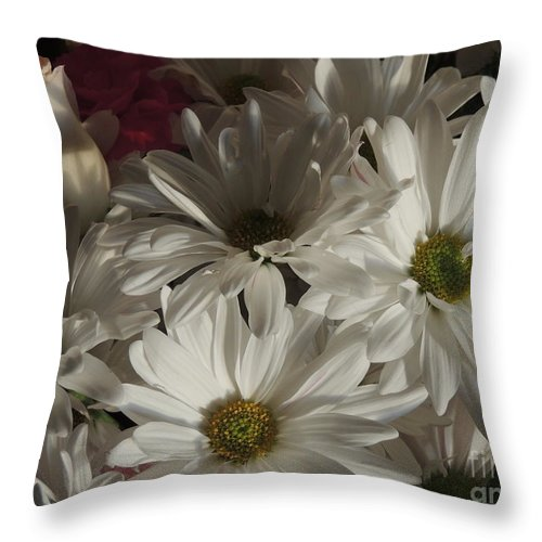 White Daisies Throw Pillow featuring the photograph New Beginnings by Traci Hallstrom