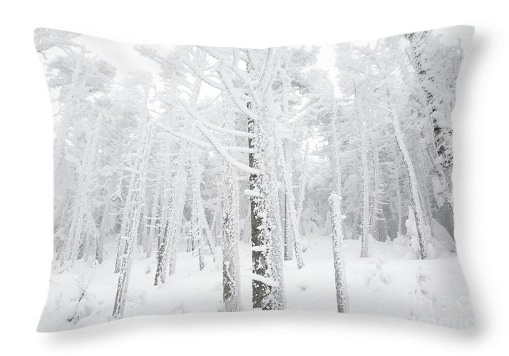 Snow Covered Throw Pillow featuring the photograph New England - Snow Covered Forest by Erin Paul Donovan