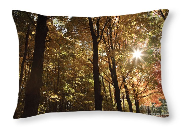 Forest Canopy Throw Pillow featuring the photograph New England Autumn Forest by Erin Paul Donovan
