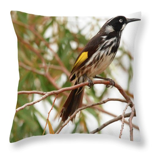 Honey-eater Throw Pillow featuring the photograph New Holland Honey-eater by Peter Krause