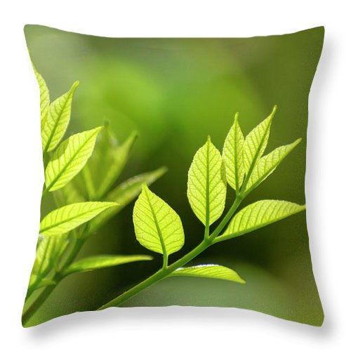 Spring Throw Pillow featuring the photograph New Life by Christina Rollo