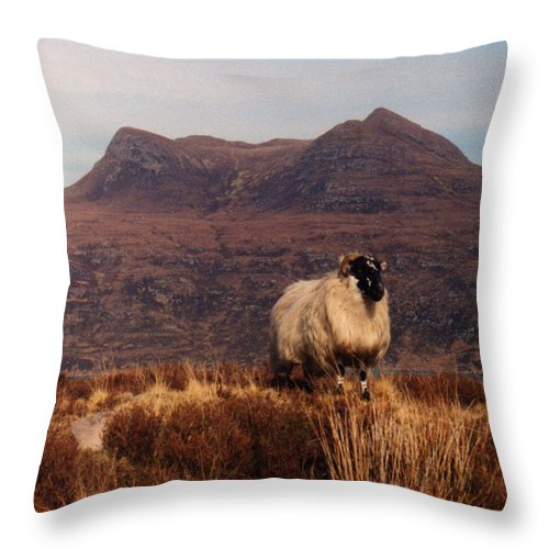 Sheep Throw Pillow featuring the photograph New Monarch Of The Glen by Rodger Insh