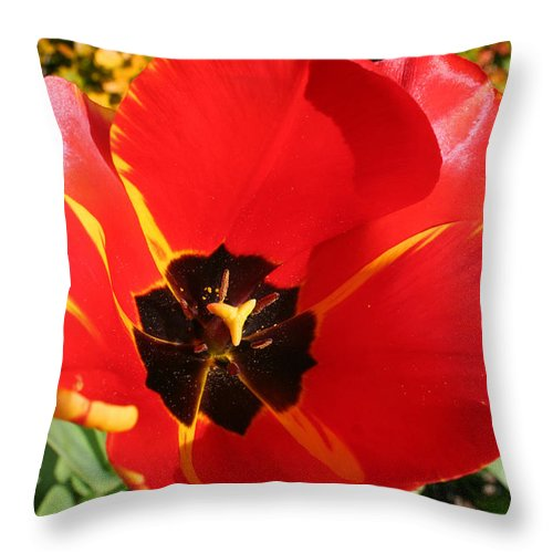 Red Tulips Throw Pillow featuring the photograph New Spring Beginnings by Mary Gaines