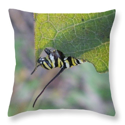 Nature Throw Pillow featuring the photograph Nibbler by Peggy King