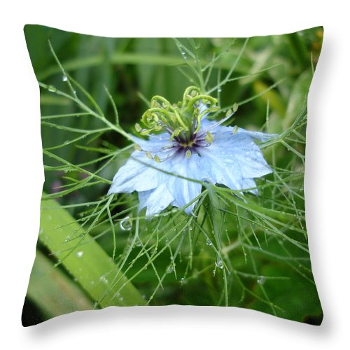 Flower Throw Pillow featuring the photograph Nigella In Spring Rain by Susan Baker