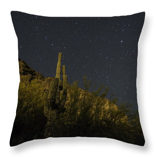 Arizona Throw Pillow featuring the photograph Night Cactus by Rachael Armstead
