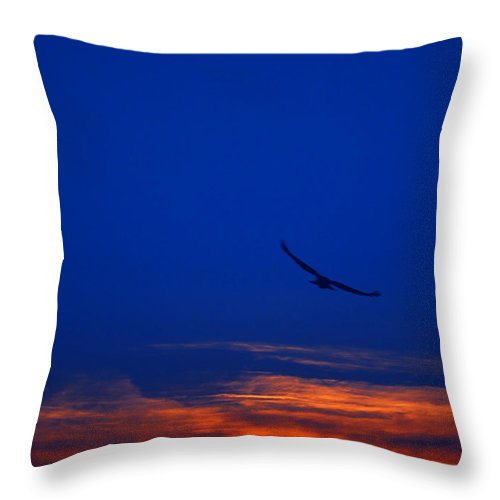 Abstract Throw Pillow featuring the photograph Night Hawk by Svetlana Sewell