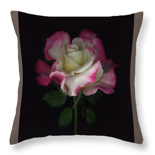 Rose Throw Pillow featuring the digital art Niki's Rose by Sandi F Hutchins