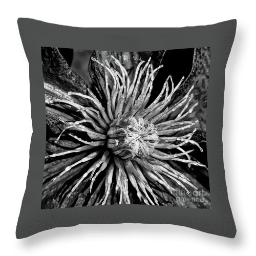 Nik Silver Fine Art Process Throw Pillow featuring the photograph Niobe Clematis Study In Black And White by Jennifer Mitchell