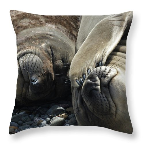 Elephant Seals Throw Pillow featuring the photograph No More Pics Please by Ernie Echols