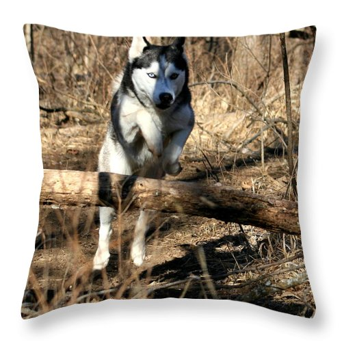 Animal Throw Pillow featuring the photograph No Problem At All by David Dunham