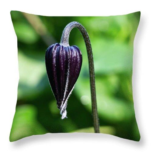 Nodding Throw Pillow featuring the photograph Nodding Clematis by Douglas Barnett