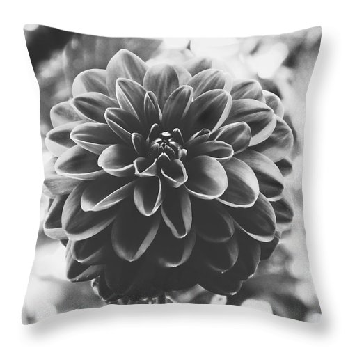 Nature Throw Pillow featuring the photograph Noir Dahlia by Karen Stahlros