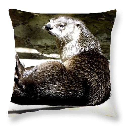 Otters Throw Pillow featuring the photograph North American River Otter by Rose Santuci-Sofranko