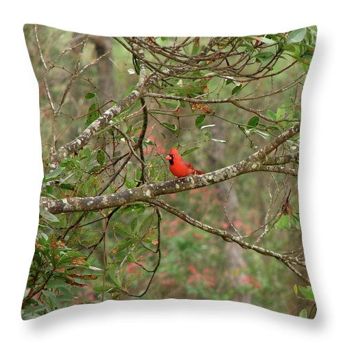 North Throw Pillow featuring the photograph North Carolina Cardnial by Brett Winn