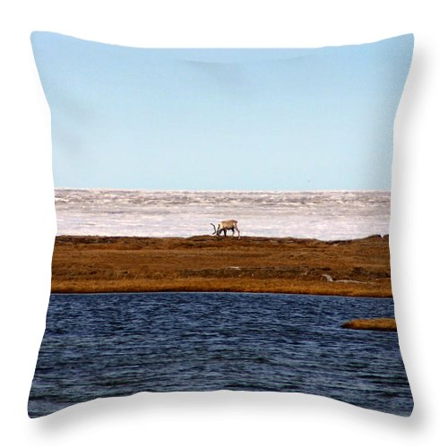 Arctic Throw Pillow featuring the photograph North Slope by Anthony Jones