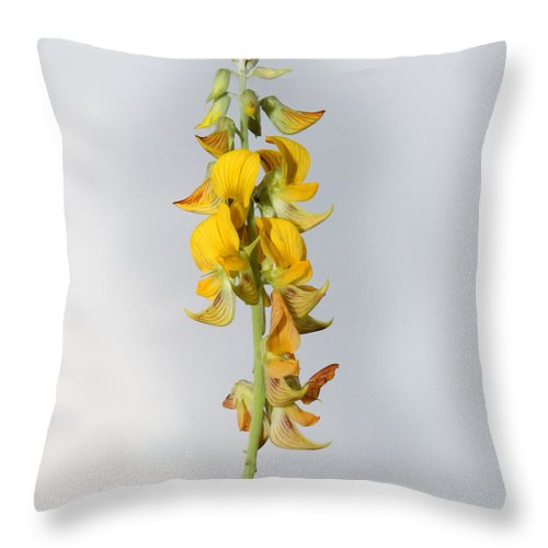 Wild Flowers Throw Pillow featuring the photograph Not Just A Weed by Joseph G Holland