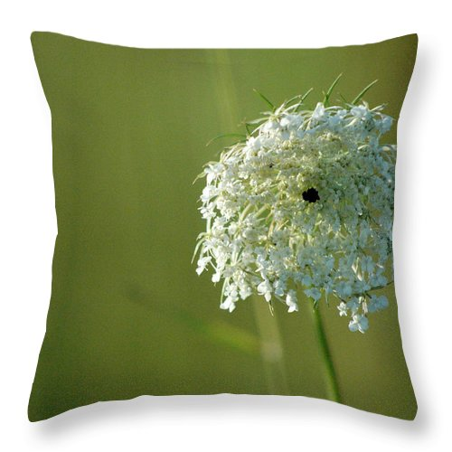 Nature Throw Pillow featuring the photograph Not Just A Weed by Trish Hale