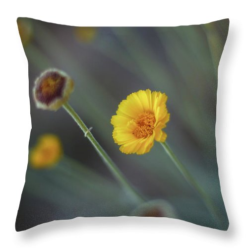 Yellow Throw Pillow featuring the photograph Nothing Gold Can Stay by Martina Schneeberg-Chrisien