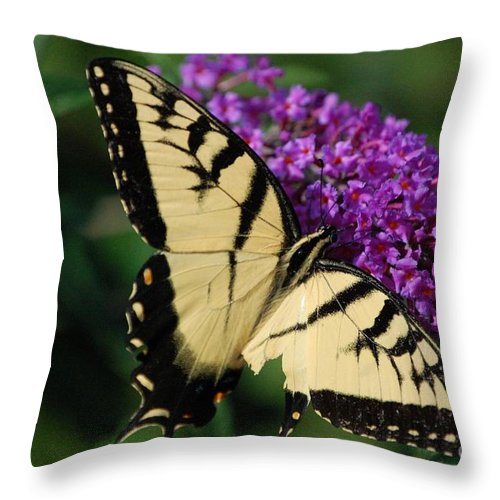 Butterfly Throw Pillow featuring the photograph Nothing Is Perfect by Debbi Granruth