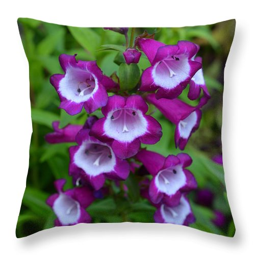 Purple Throw Pillow featuring the photograph Nothing's Quite As Pretty by Lew Davis