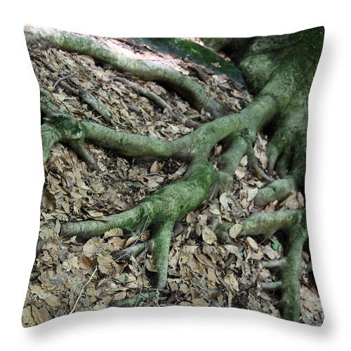 Trees Throw Pillow featuring the photograph Nourishment by Amanda Barcon