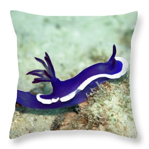 Nudibranch Throw Pillow featuring the photograph Nudibranch by MotHaiBaPhoto Prints