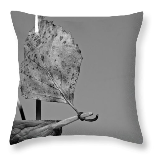 Art Throw Pillow featuring the photograph nutshell sailboat BW by Shu Fu