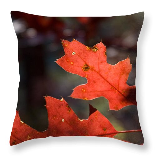 Oak Throw Pillow featuring the photograph Oak Leaves Aglow by Douglas Barnett
