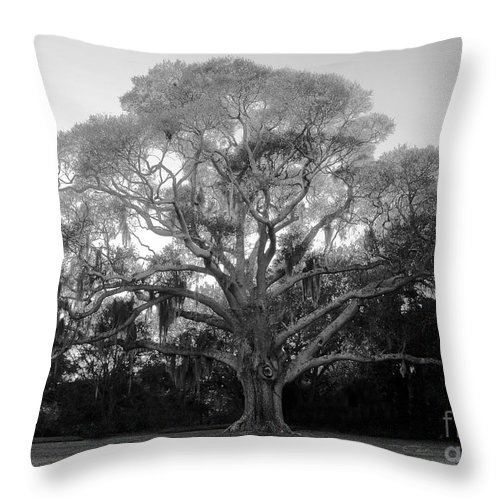 Oak Tree Throw Pillow featuring the photograph Oak Tree by David Lee Thompson