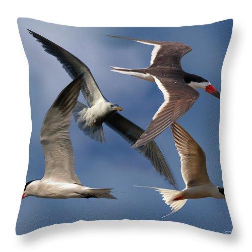 Sea Bird Collage Throw Pillow featuring the photograph Ocean Bird Collage by David Salter