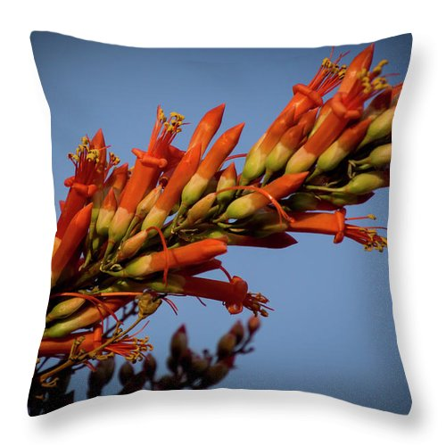 Ocotillo Flower Throw Pillow featuring the photograph Ocotillo Flower by Donald Pash