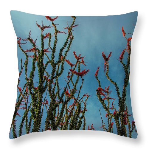 Ocotillo Flower Throw Pillow featuring the photograph Ocotillo Flowers by Donald Pash