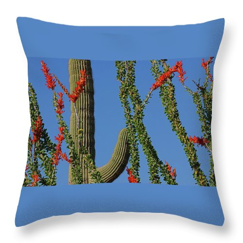 A Plant Indigenous To The Sonoran Desert And Chihuahuan Desert In The Southwestern United States (southern Nevada Throw Pillow featuring the photograph Ocotillo Majic by Reed Rahn