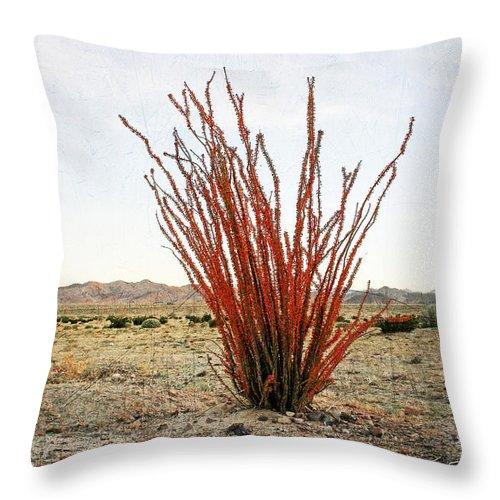 Gabriele Pomykaj Throw Pillow featuring the photograph Ocotillo Plant by Gabriele Pomykaj