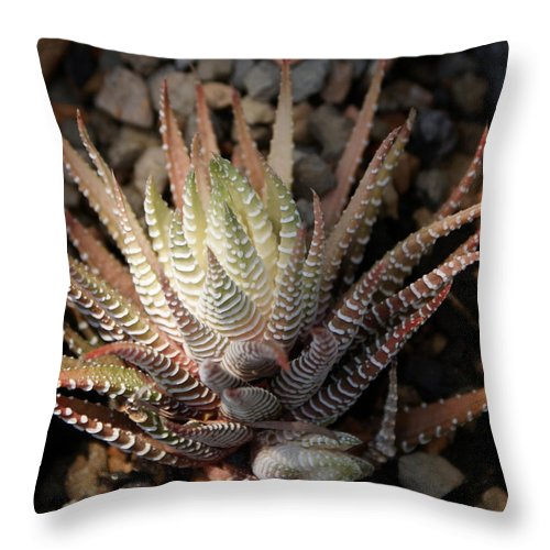 Cacti Throw Pillow featuring the photograph Octo Cacti by Shelley Jones