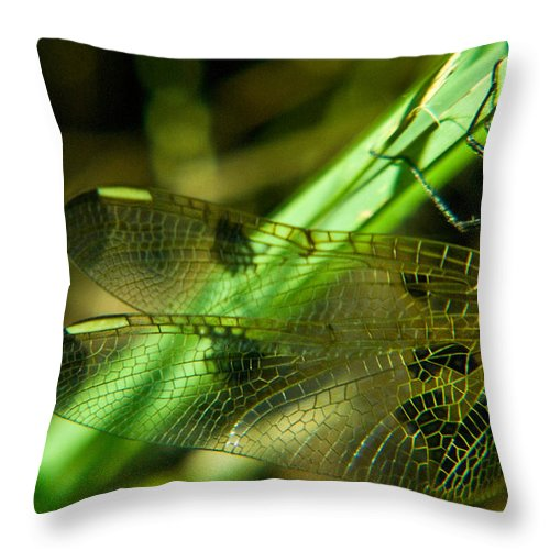 Odanata Throw Pillow featuring the photograph Odanate Wing by Douglas Barnett