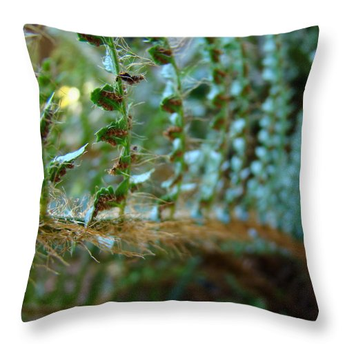 Fern Throw Pillow featuring the photograph Office Art Fern Green Forest Ferns Giclee Prints Baslee Troutman by Baslee Troutman