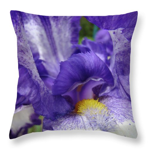 Office Throw Pillow featuring the photograph Office Art Prints Iris Flowers Purple White Irises 40 Giclee Prints Baslee Troutman by Baslee Troutman