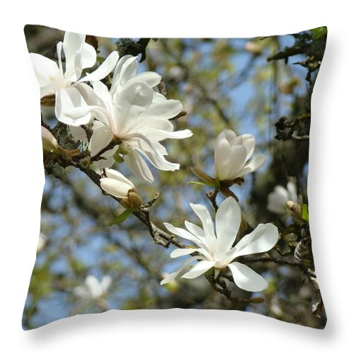 Magnolia Throw Pillow featuring the photograph Office Art Prints Magnolia Tree Flowers Landscape 15 Giclee Prints Baslee Troutman by Baslee Troutman