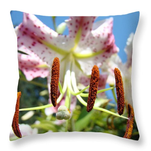Lilies Throw Pillow featuring the photograph Office Art Prints Pink White Lily Flowers Botanical Giclee Baslee Troutman by Baslee Troutman