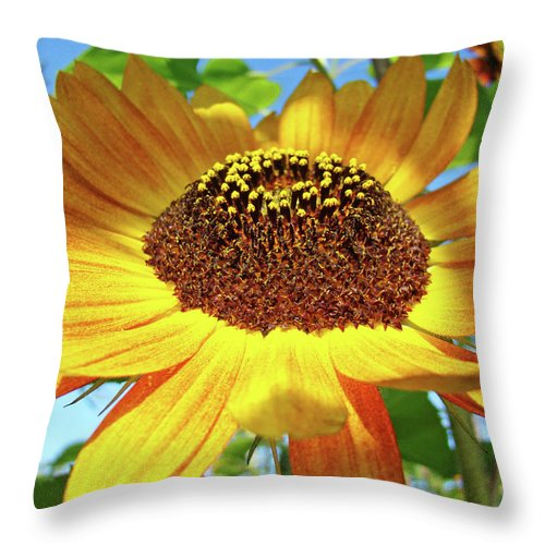 Sunflower Throw Pillow featuring the photograph Office Art Prints Sunflowers Giclee Prints Sun Flower Baslee Troutman by Baslee Troutman