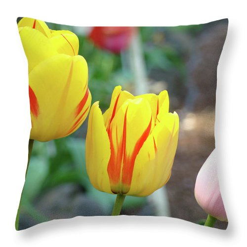 Tulip Throw Pillow featuring the photograph Office Art Prints Tulips Tulip Flowers Garden Botanical Baslee Troutman by Baslee Troutman